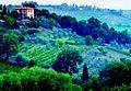 Calabria_vineyard