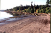Beach_cedar